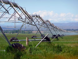 An irrigation pivot in operation with the new 'dripper' technology that replaced impact sprinklers.