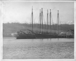 The codfish fleet, last of the working sail powered vessels, wintered over in Poulsbo at the end of the locked Union Oil dock. The father of mother's best friend was the manager, and Grandma Young took me to tour the schooners when I was five. A single feature of the ship enthused me to become a cod fisherman. There was a soft serve ice cream machine onboard! The Olympic Mountains provided a spectacular background.